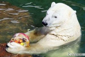 День рождения в Ленинградском Зоопарке